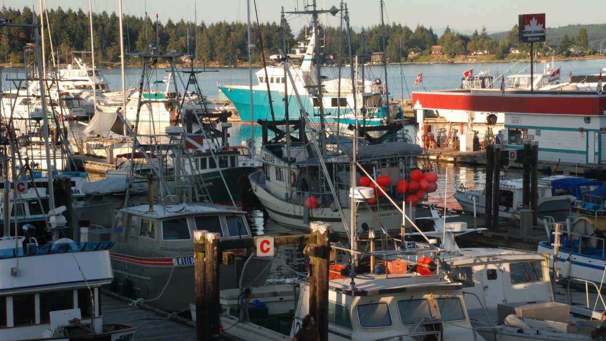 Marina with small boats